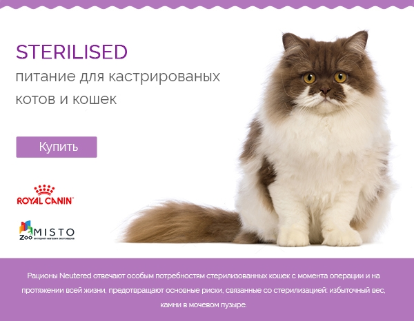 Sterilised Cat
